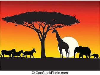 Vector Illustration Of Safari background