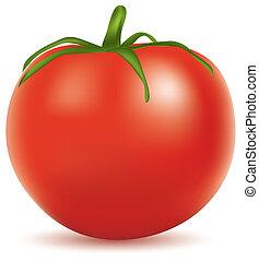 vector illustration of tomato