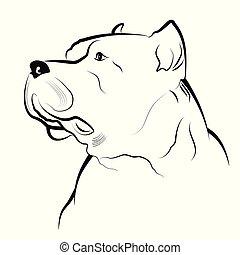 Vector illustration - Pitbull on a white background.