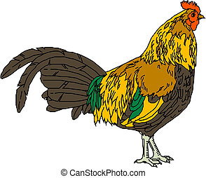 vector image of a rooster