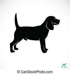 Vector image of an dog beagle on white background