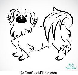 Vector image of an Dog (Pekingese)