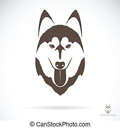 Vector image of an dog siberian husky on white background