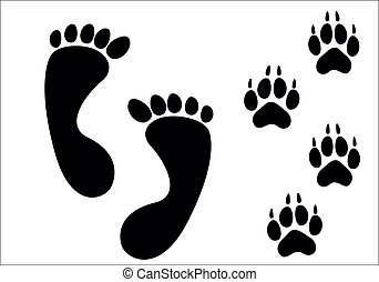Vector paw prints isolated on white
