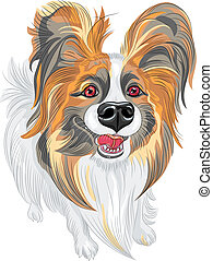 cute smiling Papillon red and black dog with long shaggy ears