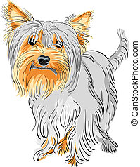 closeup color sketch Yorkshire terrier red and black