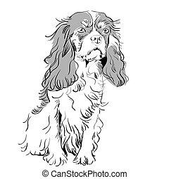 vector purebred dog Cavalier King Charles Spaniel