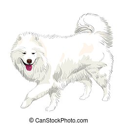 fluffy white Samoyed dog runs and smiles