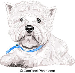 color sketch closeup portrait serious dog West Highland White Terrier breed with blue collar