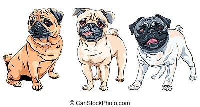 vector set cute dog pug breed