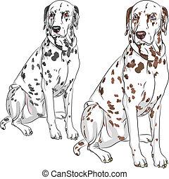 vector set dog Dalmatian breed sitting
