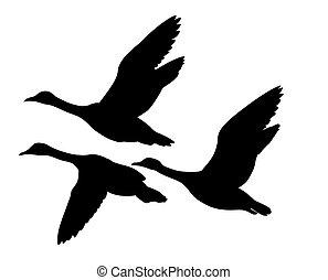 vector silhouette flying ducks on white background