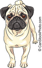 color sketch cute serious dog fawn pug breed