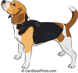 color sketch of the dog Beagle breed