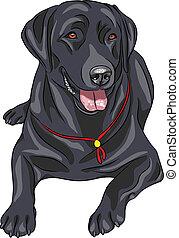 smiling black gun dog breed Labrador Retriever lying