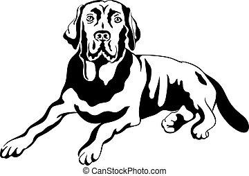 black and white sketch a portrait of a close-up of serious dog breed labrador retrievers lies