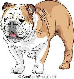 COLOR sketch of the dog English Bulldog breed