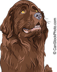 vector sketch dog Newfoundland hound breed sitting