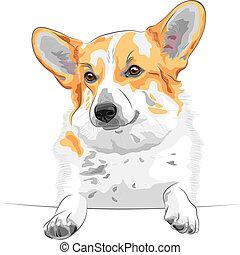 color sketch of the dog Pembroke Welsh corgi breed smiling