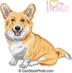 color sketch of the dog Pembroke Welsh corgi breed sitting and smiling