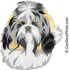 color sketch of the dog Shih Tzu (dog-lion; dog-chrysanthemum) Chinese breed