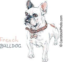 vector sketch domestic dog French Bulldog breed