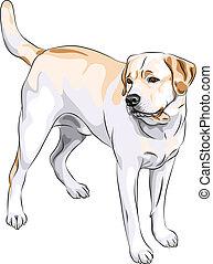 vector sketch gun dog breed Yellow Labrador Retriever