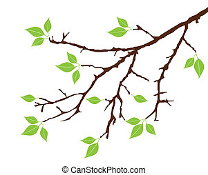 vector tree branch with leaves