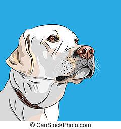 vector white dog breed Labrador Retriever