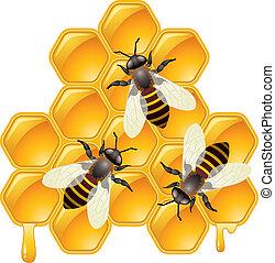 vector working bees on honeycomb honeycells