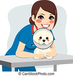 Cute little dog with cone collar and happy female veterinarian