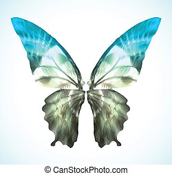 Vibrant blue Butterfly Isolated on White. Vector