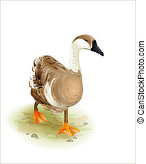 Walking domestic goose. Watercolor style