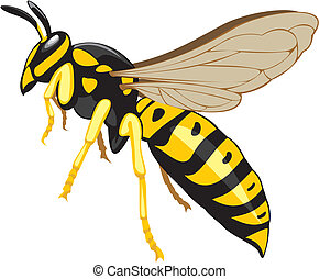 household pest, pest control, social insect