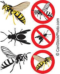 parasitic wasps or preys, european paper wasp