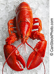 Whole red lobster on ice
