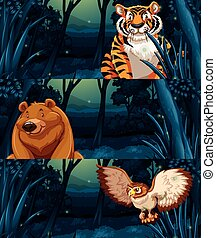 Wild animals in the woods at night