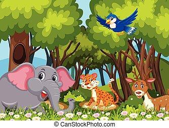 Wild animals in the woods