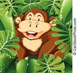 Wild monkey in the bush
