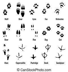 Wildlife animals, reptiles and birds footprint, animal paw prints vector set
