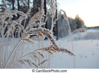 Winter scene .Frozenned flower .