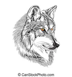 Wolf muzzle with yellow eyes sketch