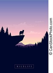 wolf on a cliff wildlife forest at sunset