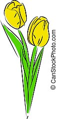 Yellow tulips, illustration, vector on white background.
