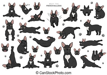 Yoga dogs poses and exercises. French bulldog clipart