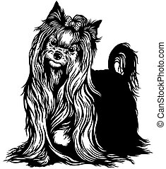yorkshire terrier dog , black and white image