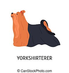 Yorkshire Terrier. Cute small lap dog isolated on white background. Adorable purebred domestic animal or pet of toy breed with long-haired coat. Colored vector illustration in flat cartoon style.