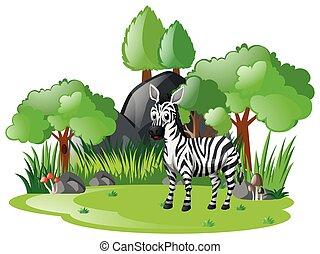 Zebra living in the woods
